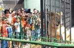 Zooloogico 1