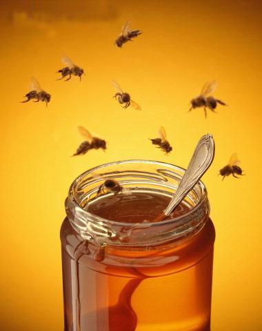 La miel avileña no repugna | Portalavila's Blog